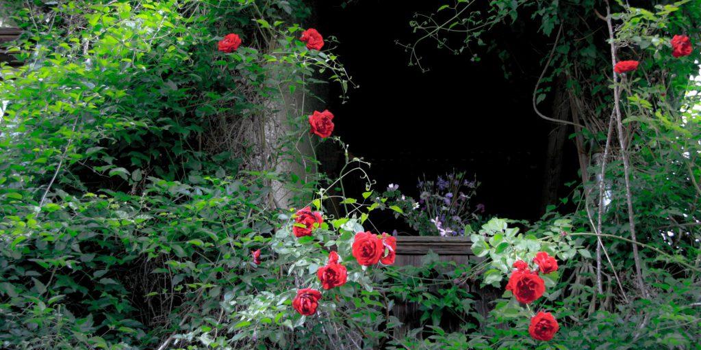 Wo der Garten beginnt und wo er aufhören soll ist nichtig.