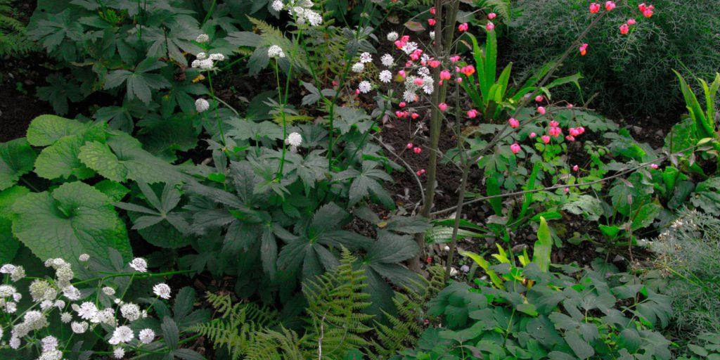 Wir sind für geobotanische Pflanzgesellschaften zuständig und gewähren ihnen damit Handlungsbedarf.