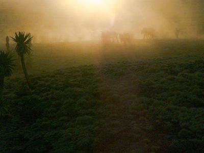 Semiengebirge, Äthiopien März 2015